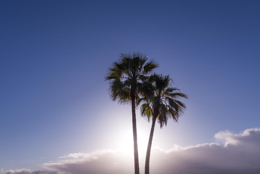 PALMTREES-CARLSBAD-SUNRISE-SAN-DIEGO-CA