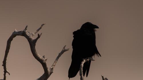 -BIRD-SAN-ONOFRE-SAN-DIEGO-CA