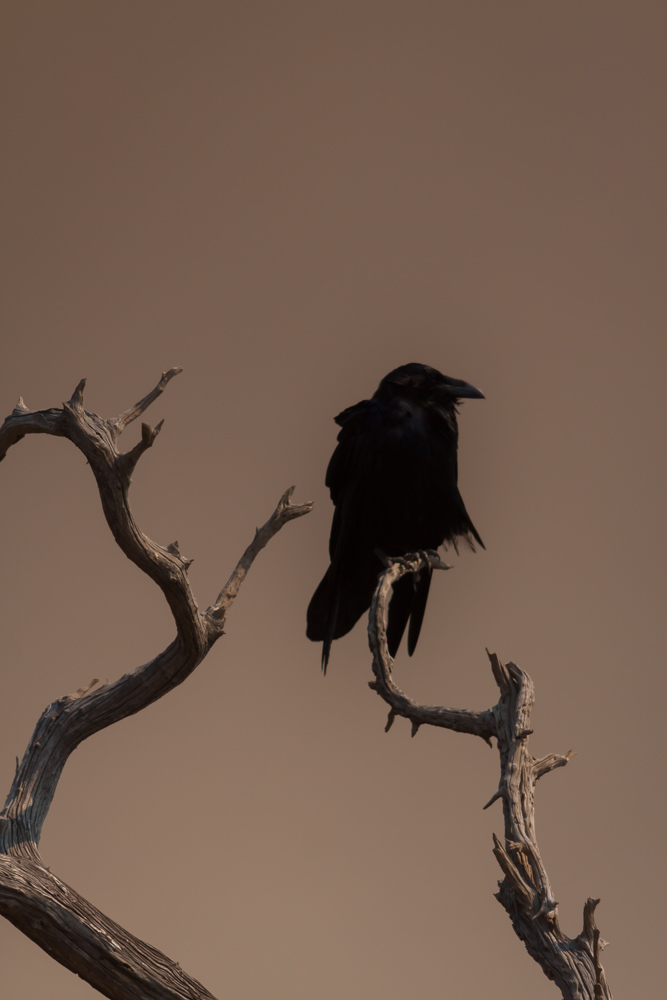 BIRD-SAN-ONOFRE-SAN-DIEGO-CA
