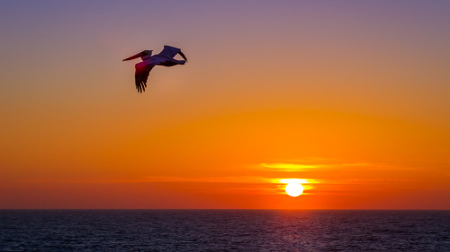 PELICAN-SUNSET-OCEANSIDE-SAN-DIEGO-CA