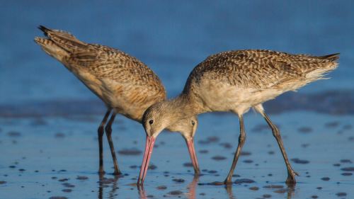 BIRDS-CARLSBAD-SAN-DIEGO-CA