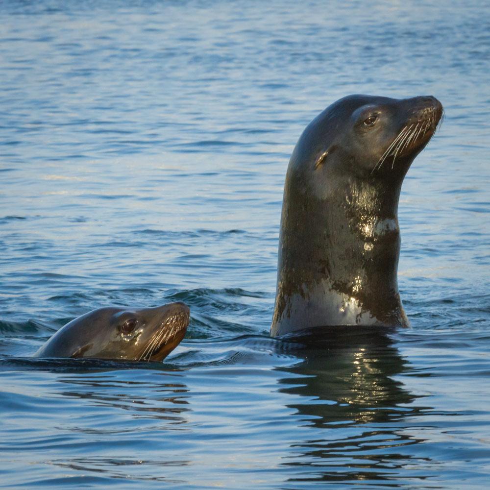 SEALS-OCEANSIDE-SAN-DIEGO-CA