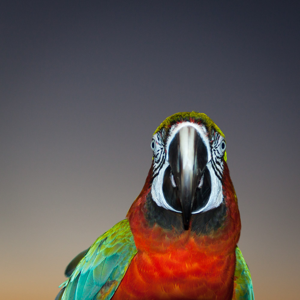 PARROT-CARLSBAD-SAN-DIEGO-CA-2
