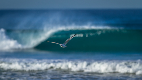 SEAGULL-OFFSHORE WAVE-SAN-DIEGO-CA
