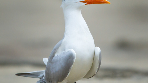 BIRD-OCEANSIDE-SAN-DIEGO-CA