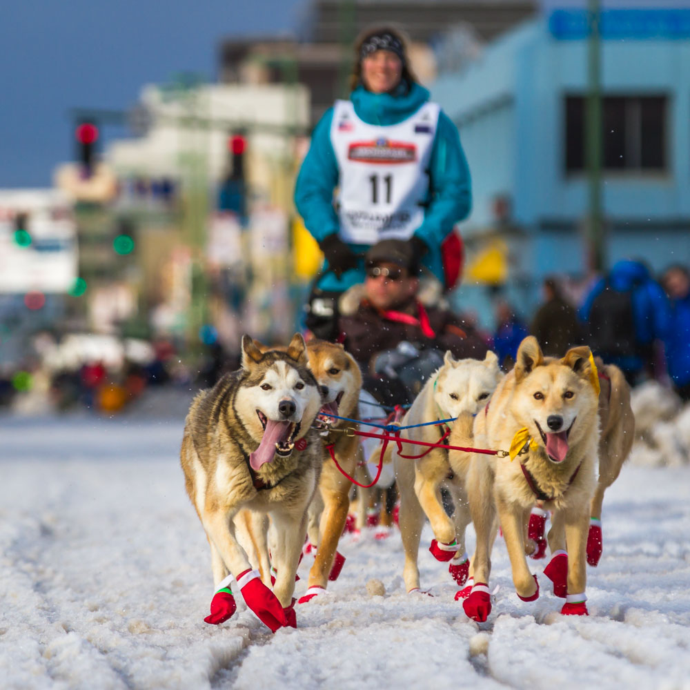 DOG-SLED-IDITAROD-ALASKA.jpg