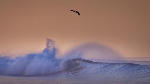 _MG_8974-WAVE-PELICANS-SUNRISE-CARLSBAD-SAN-DIEGO-CA