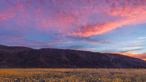 DESERT-WILDFLOWERS-SUNRISE-CA