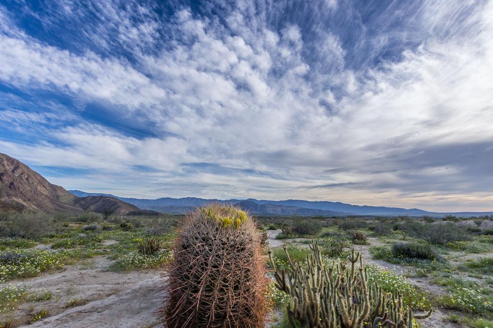 WILD-FLOWERS-GREEN-DESERT-CA