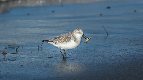 Sandpiper-North-County-San-Diego-CA