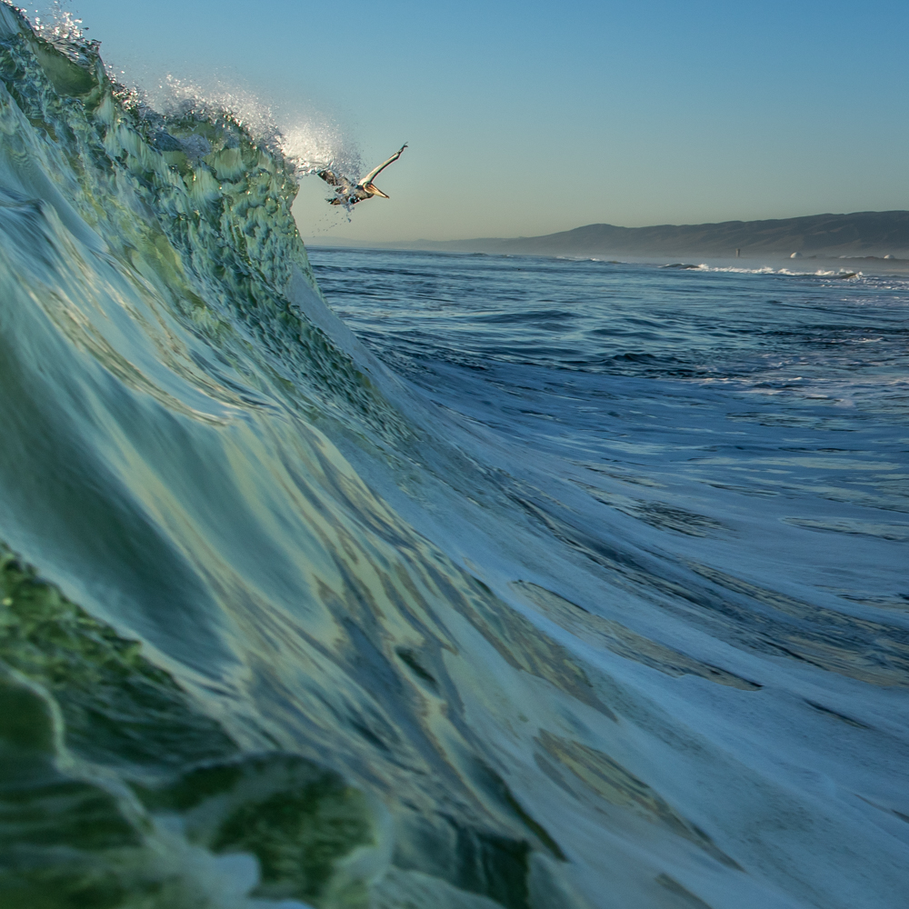 Pelican-Wave-North-County-San-Diego-CA
