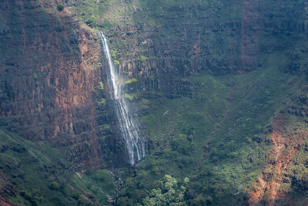 Birds-Waterfall-Hawaii