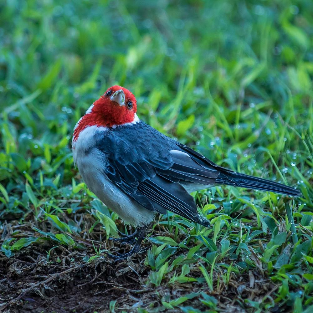 Bird-Hawaii