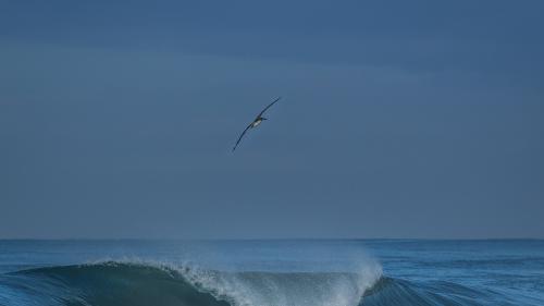 Carlsbad-Pelican-San-Diego-CA