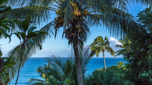 IMG_7386-Hawaii