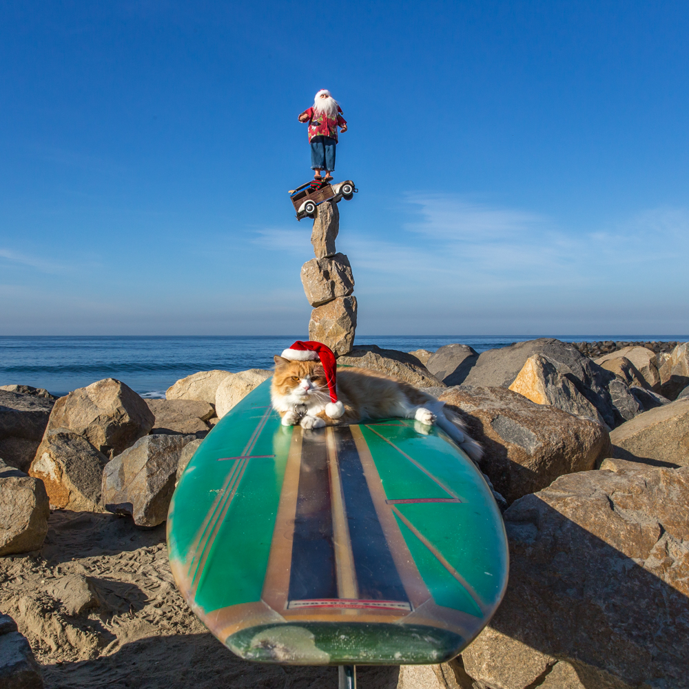 CHRISTMAS-CARLSBAD-CAT-IN-THE-HAT-SAN-DIEGO-CA