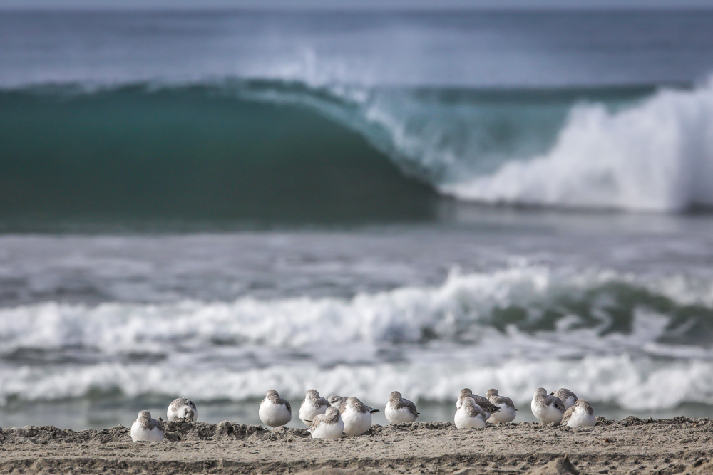 SAND-PIPERS-NORTH-COUNTY-SAN-DIEGO-CA