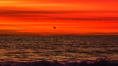 PELICAN-SUNSET-NORTH-COUNTY-SAN-DIEGO-CA