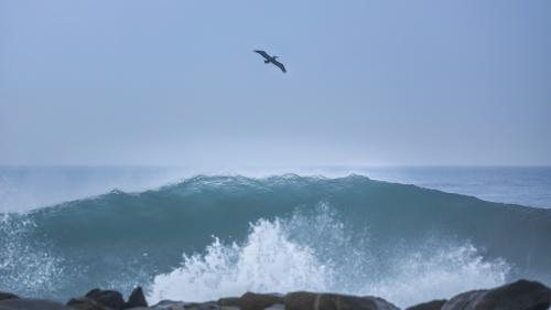 PELICAN-WAVE-NORTH-COUNTY-SAN-DIEGO-CA