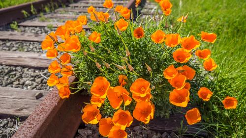 CA-FLOWERES
